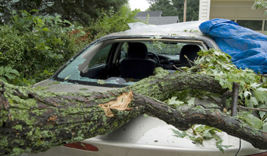 This is a photo of a car with a large broken branch across the hood.